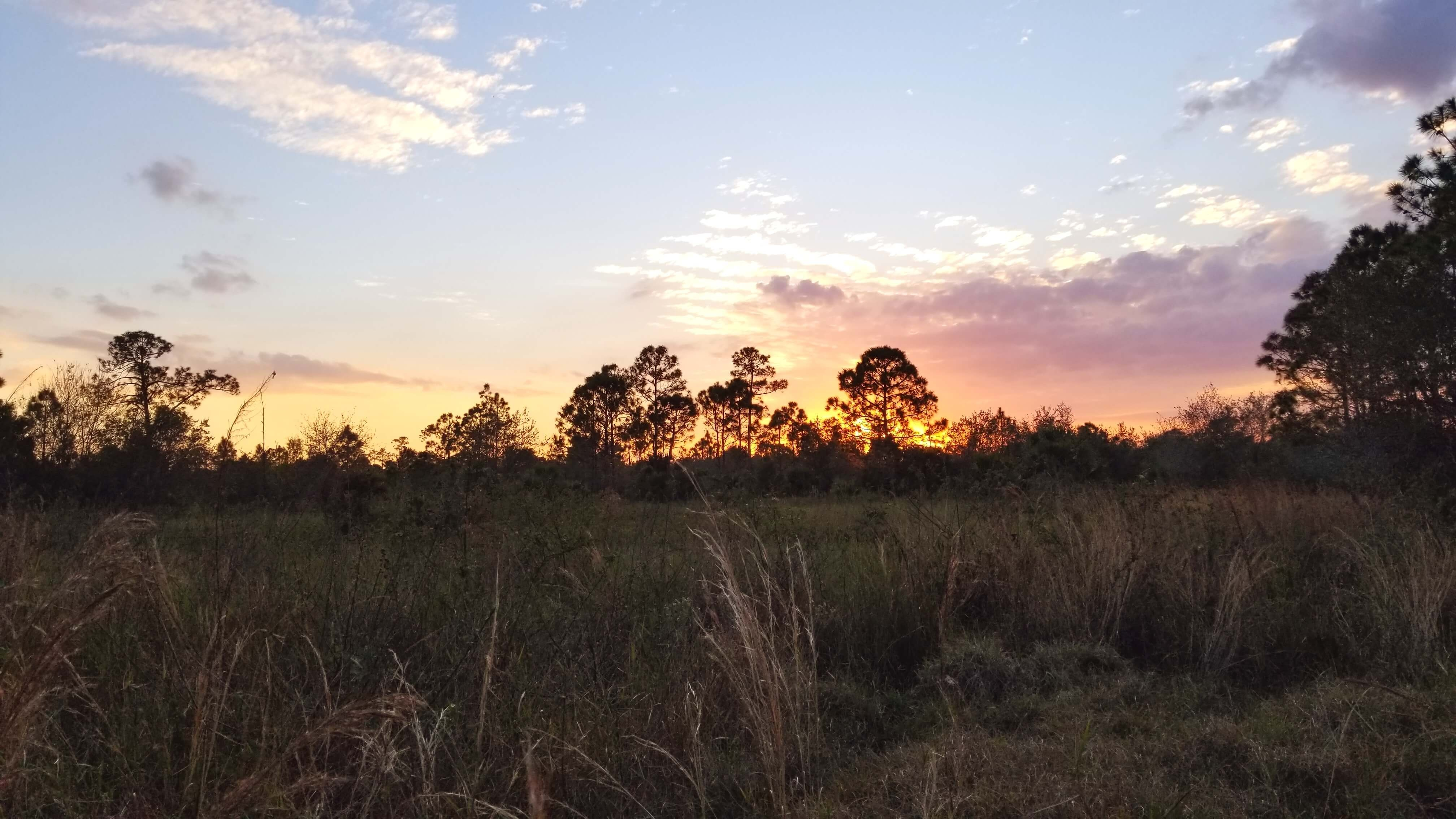 Sunset in Wild Florida Cypress Trees and Palms