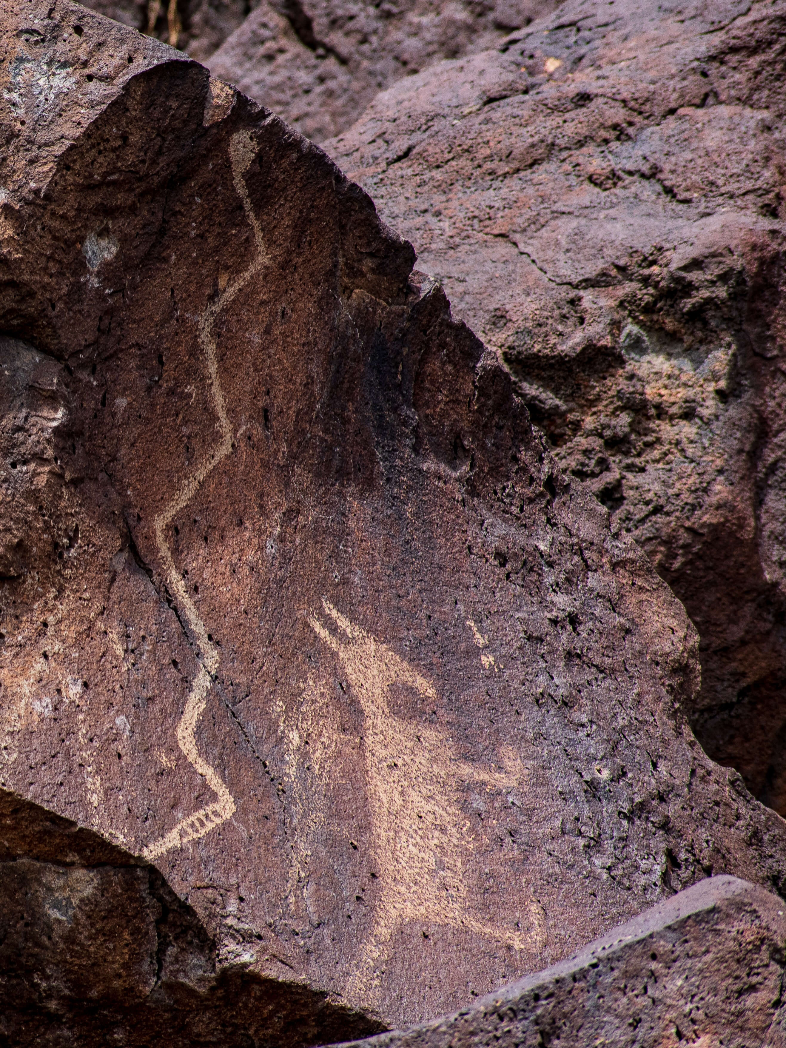 Animal Petroglyph New Mexico