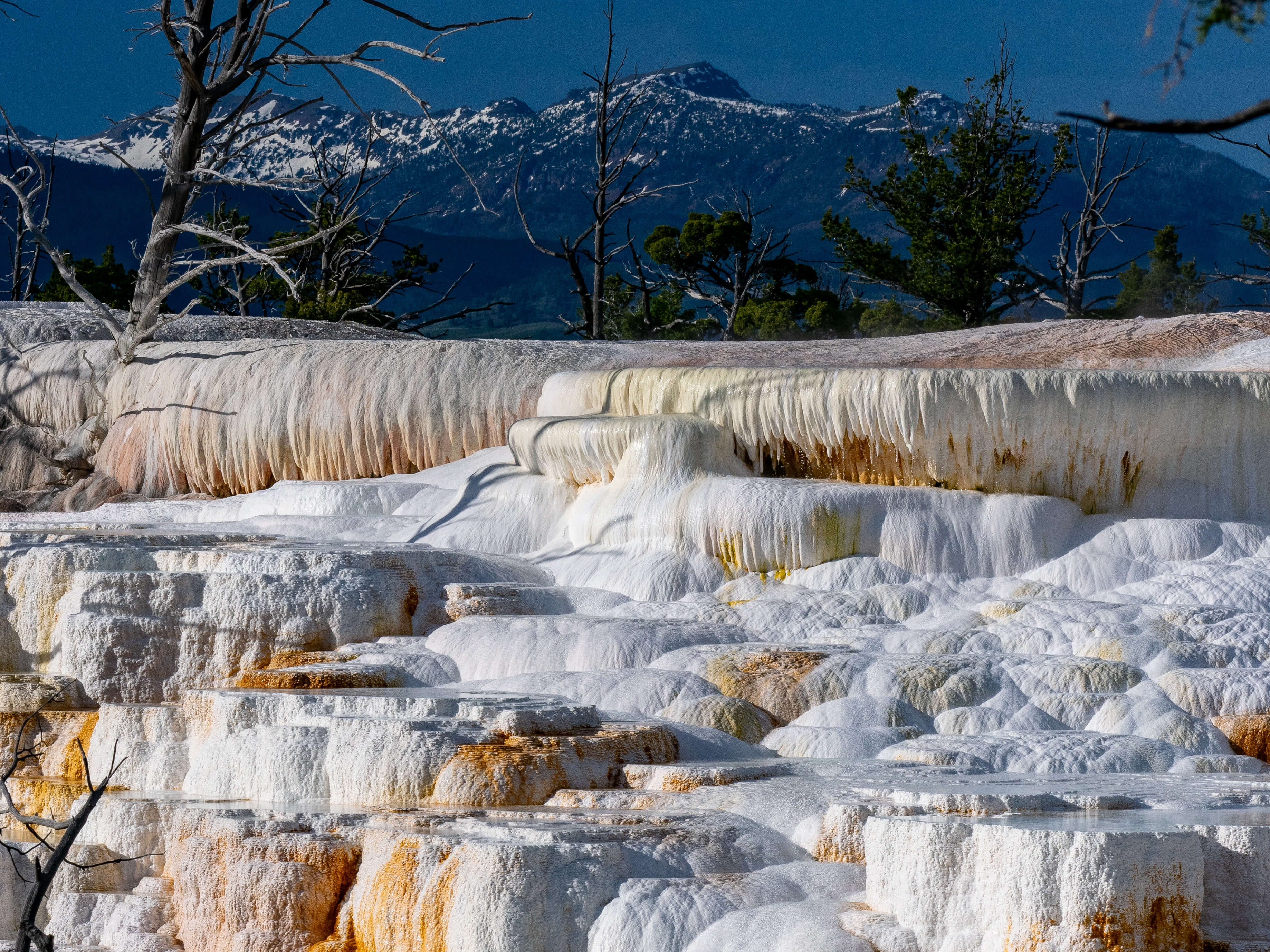 Travertine Terrace at Mammoth Hot Springs Yellowstone