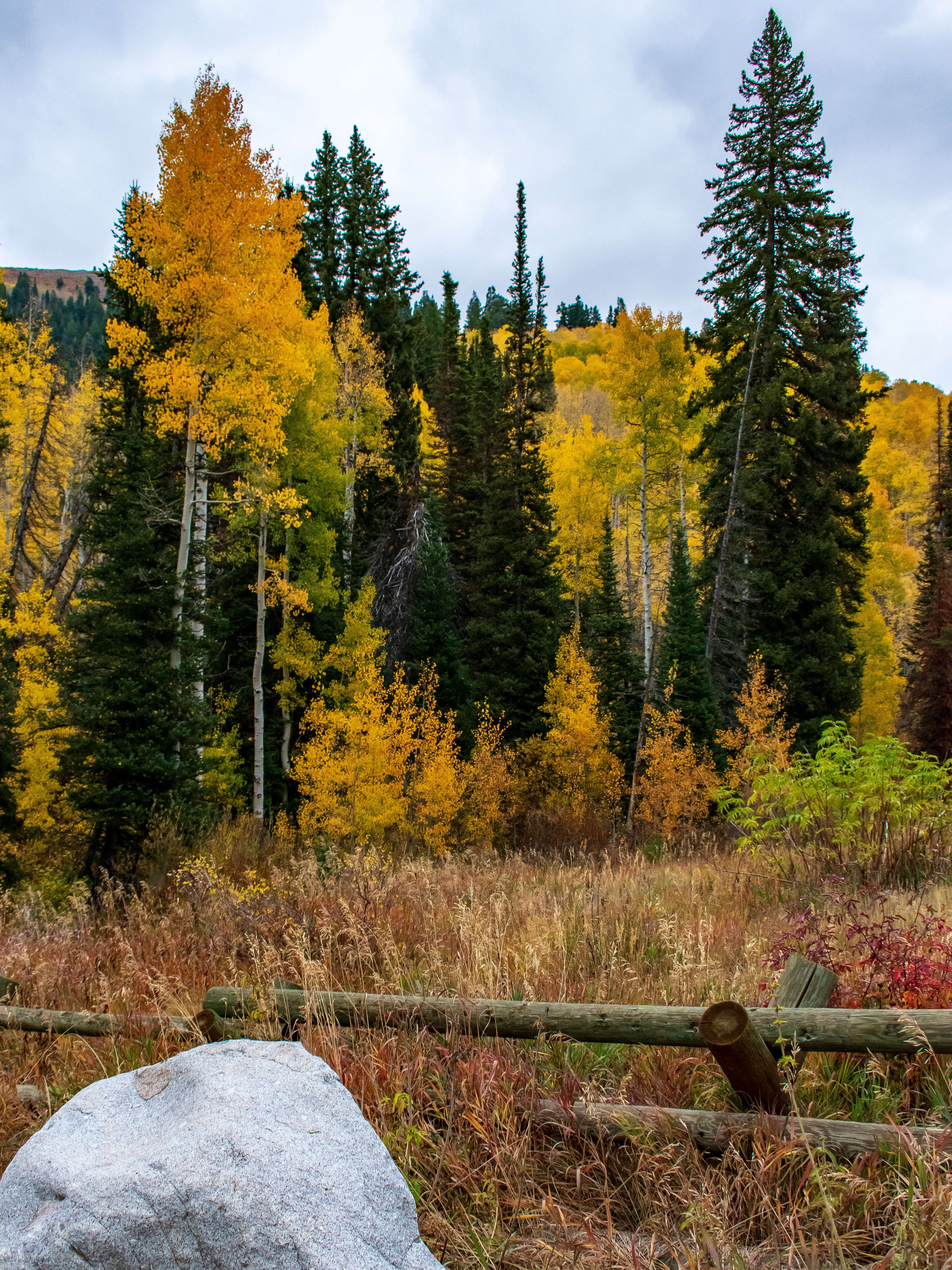 Millcreek Canyon in Fall